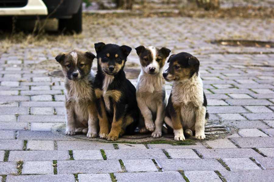 У Луцьку на відлов безпритульних тварин у грудні витратять 106 тисяч гривень