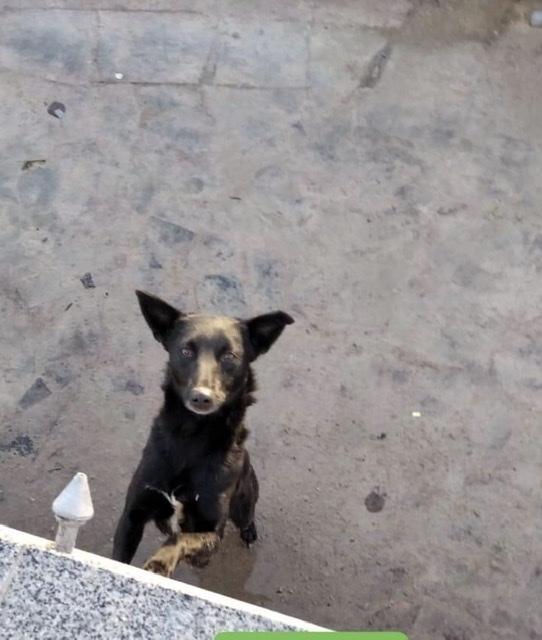 У Луцьку понад годину рятували собаку, який втрапив у фонтан