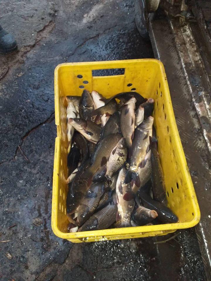Майже тонну риби випустили в озеро на Волині