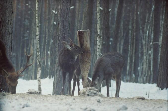 На Волині лісівники заготовили корм для диких тварин