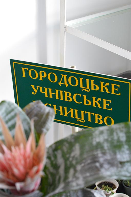 Бананове дерево, екзотичні пальми, фікуси, маракуйї, бегонії: який вигляд має зимовий сад у школі на Волині