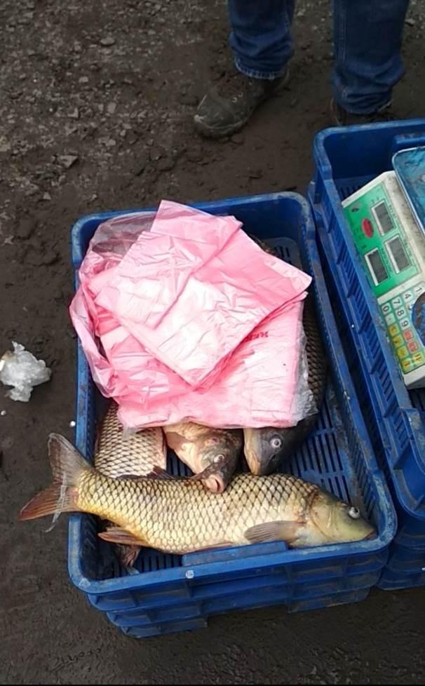 На Волині вилучили 55 кг незаконно добутої риби