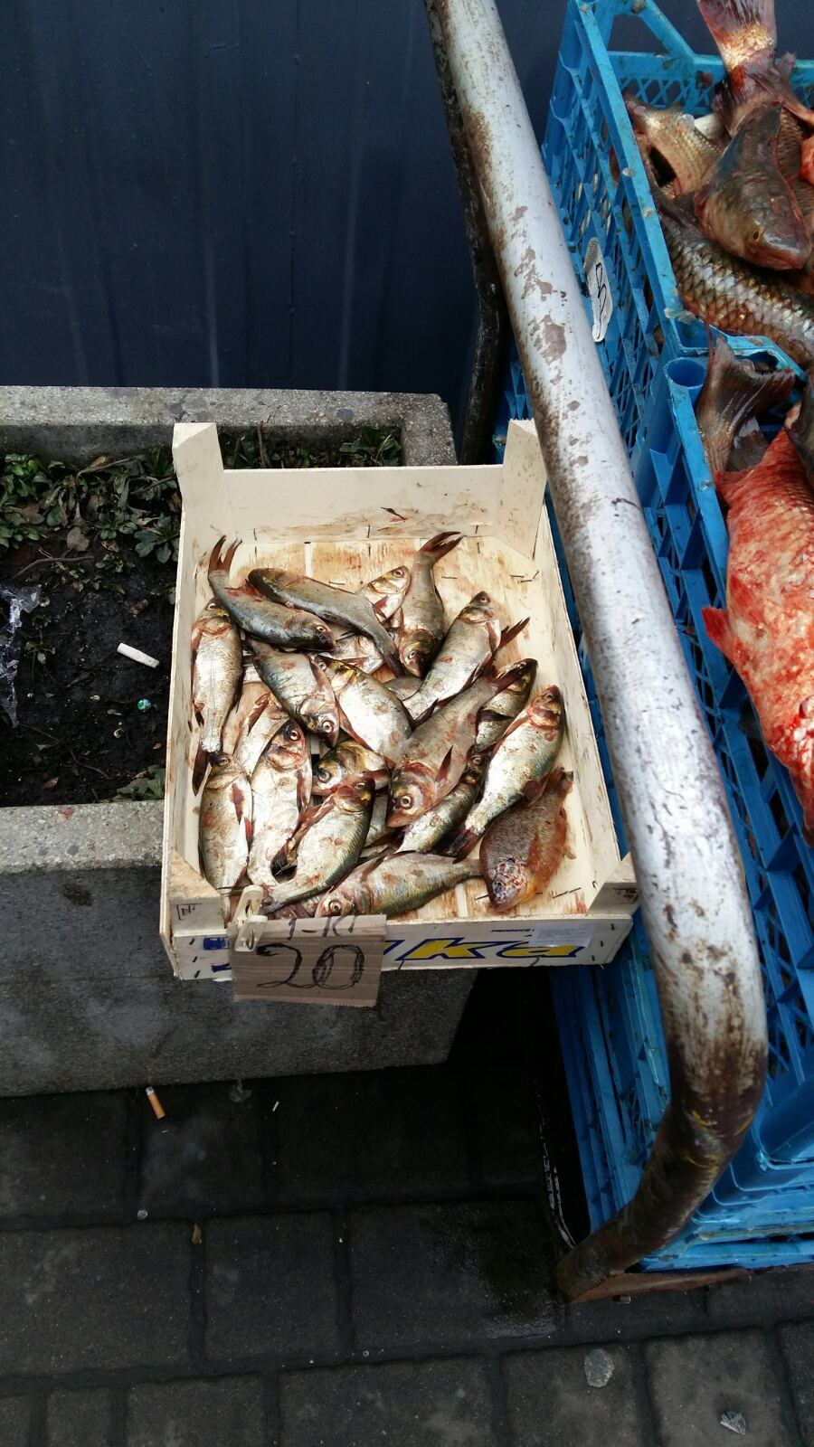 На ринках Луцька виявили незаконний продаж 72 кілогамів риби