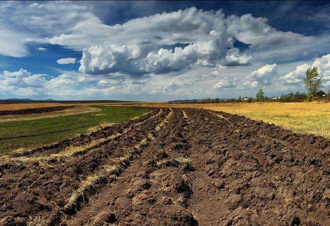 Майже тисячу гектарів волинської землі отримали у 2019 році учасники бойових дій