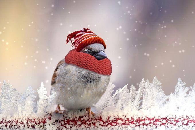 Яка буде погода у Луцьку 8 грудня