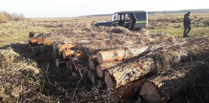 На Волині розслідують справу самовільної порубки лісу