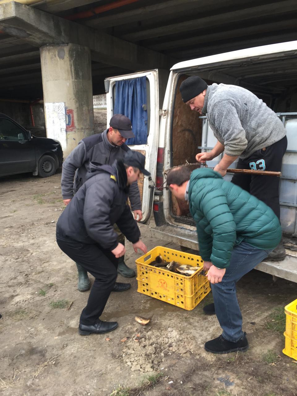 У річку Стир випустили понад одну тонну риби