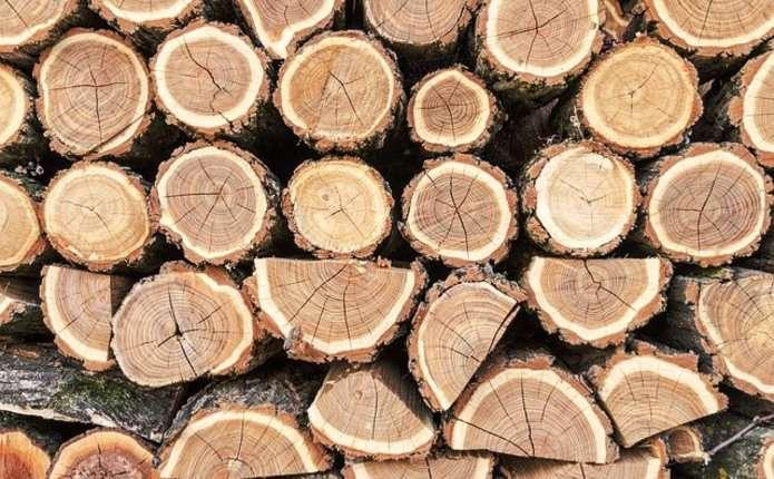 Волинські лісівники реалізували на аукціоні 20 % деревини