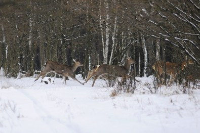 На Волині триває «перепис» диких тварин