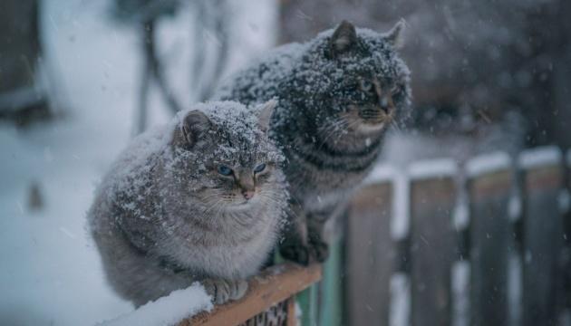 Погода у Луцьку завтра, 7 січня