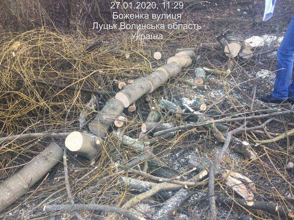 У луцькому парку незаконно зрізали дерева