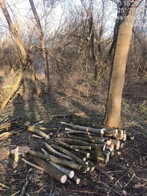 Лучанин незаконно зрізував дерева у парку