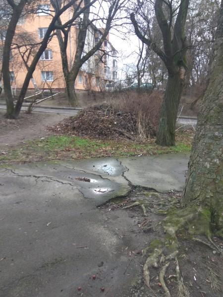 У Луцьку скаржаться на звалище гілок на одній із вулиць