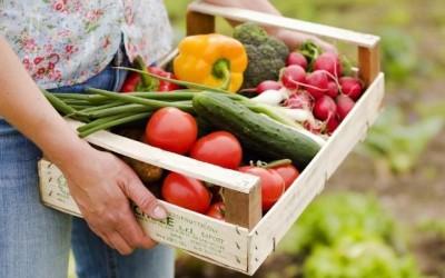 Україна увійшла в ТОП експортерів сільгосппродукції в Євросоюз