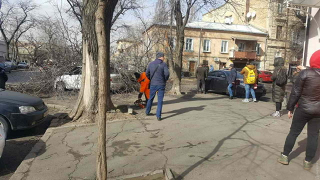 В Одесі під час шквального вітру дерево вбило жінку