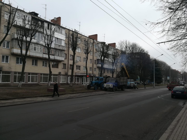 Лучанин нарікає на «варварське кронування» дерев у центрі міста