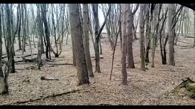 Ну Волині дев'ятьох оленів випустили з вольєра у вільний простір. ВІДЕО