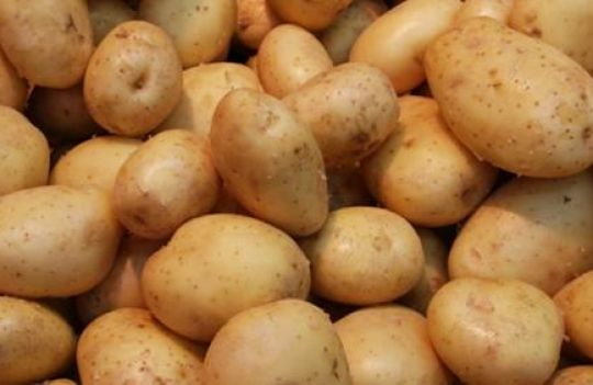 На Волині поліція викрила картопляного крадія