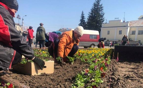 У Луцьку висаджуватимуть квіти за майже шість мільйонів