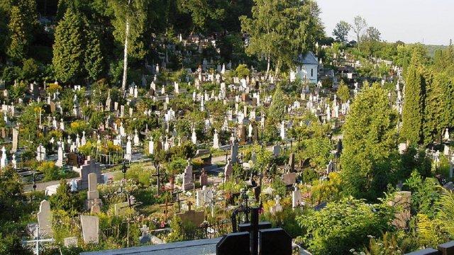 Лучани крали самшит із кладовища і продавали його у букетах