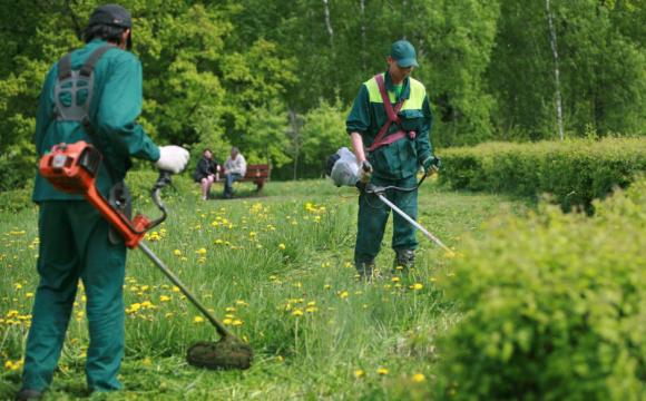 На косіння газонів у Луцьку витратять понад два мільйони