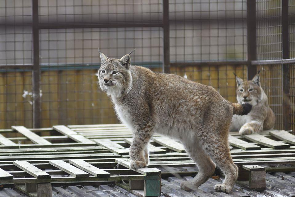 У Луцьку 8 березня жінки зможуть побувати у зоопарку безплатно