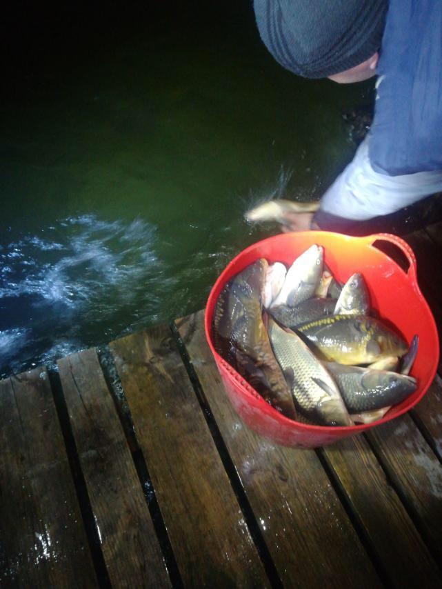 На Волині рибалки вселили 450 кілограмів молоді риб у озеро