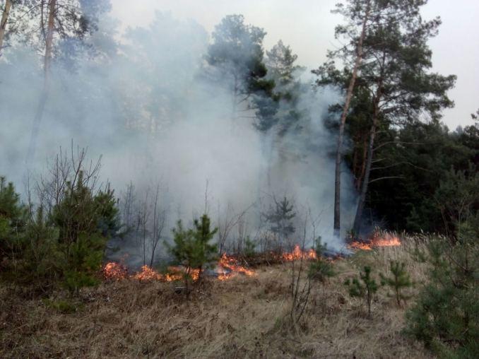 Волинь горить: протягом вихідних в області – майже три десятки пожеж через підпали трави