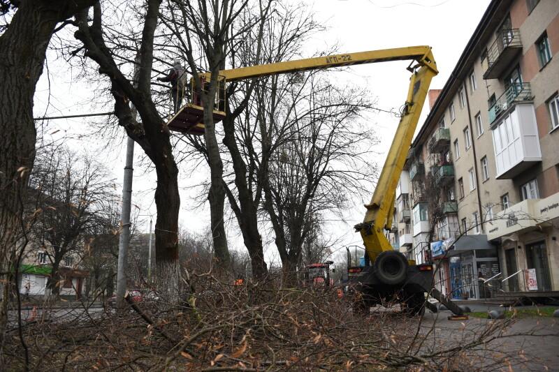 У центрі Луцька кронують дерева