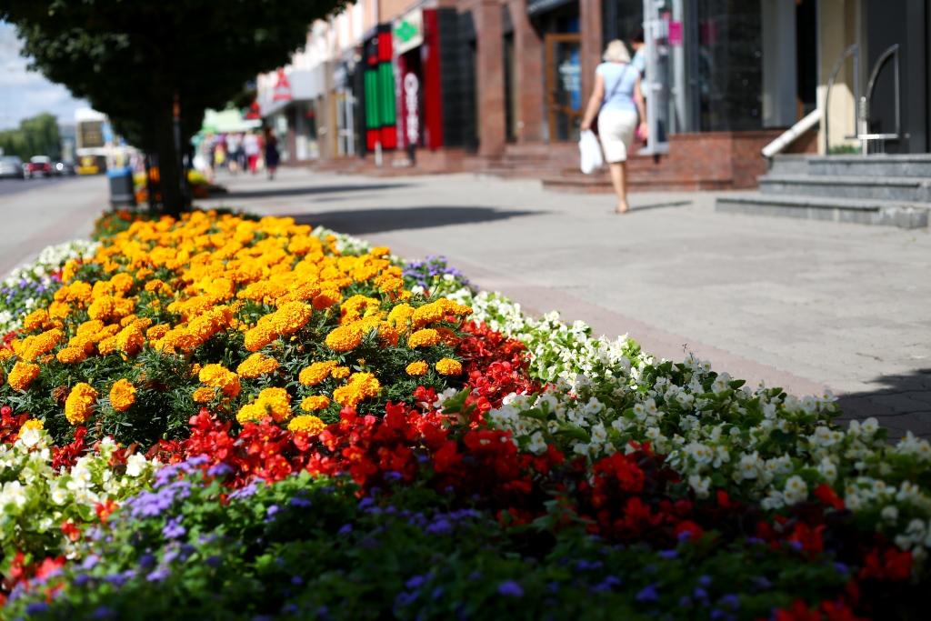 У Луцьку витратять понад півтора мільйона на розсаду квітів