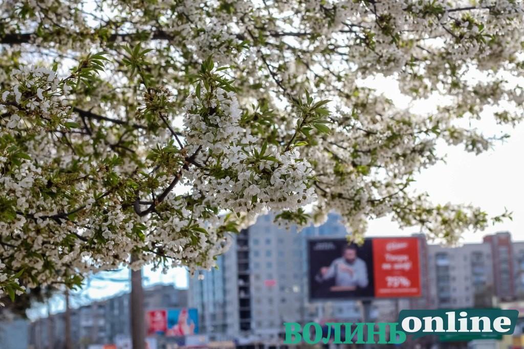 Весняний Луцьк у квітах та зелені. ФОТОРЕПОРТАЖ