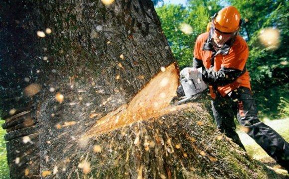 Скільки у Луцьку коштуватиме видалення дерев