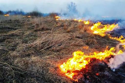 На Волині виявили палія, який спричинив пожежу на дачному масиві