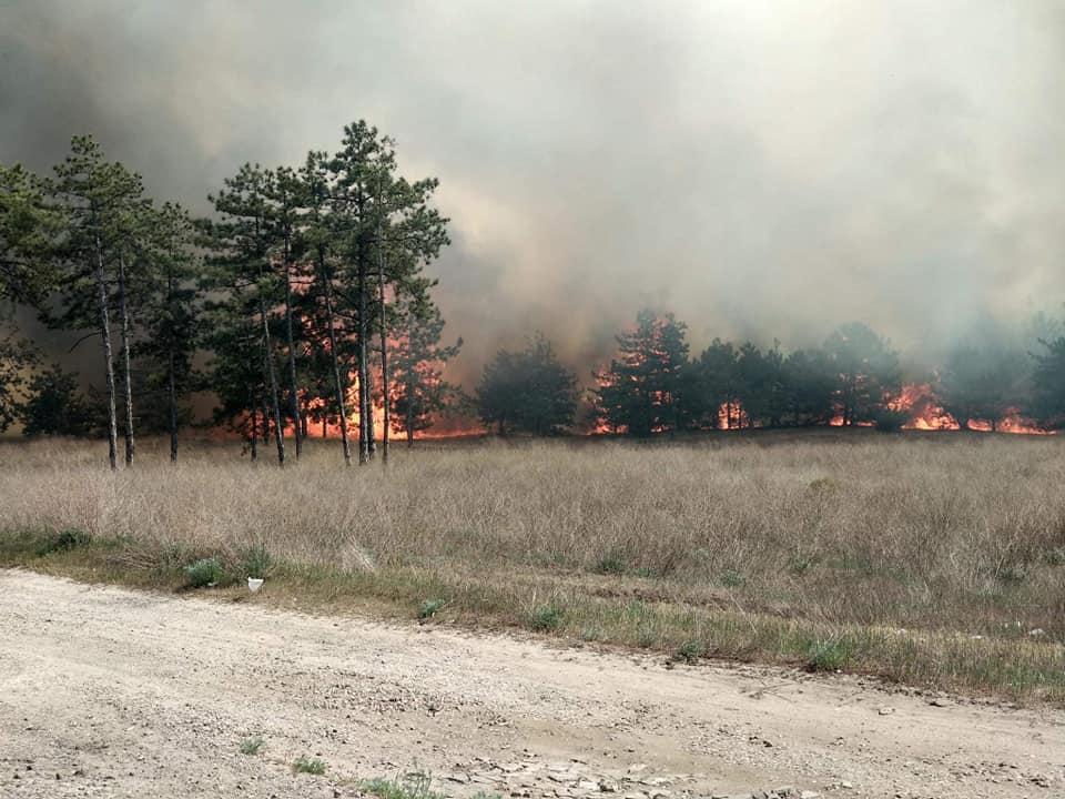 Лісова пожежа на Запоріжжі охопила п'ять гектарів лісництва