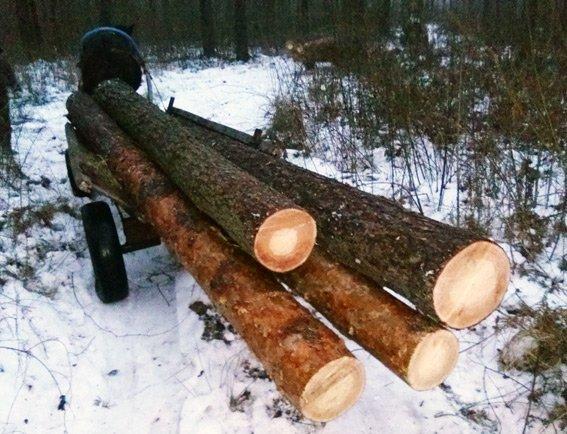 Двох волинян  судитимуть за незаконну порубку лісу