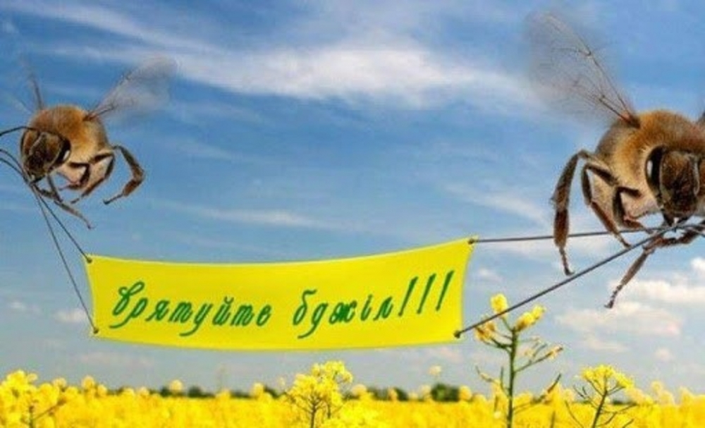 Волинянам пояснили, як не отруїти бджіл пестицидами