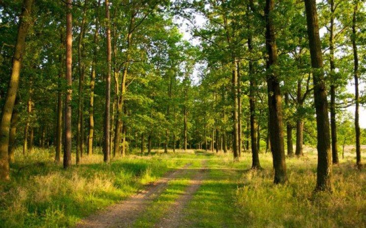 Волинянам заборонили в'їзд на автівках в лісові масиви