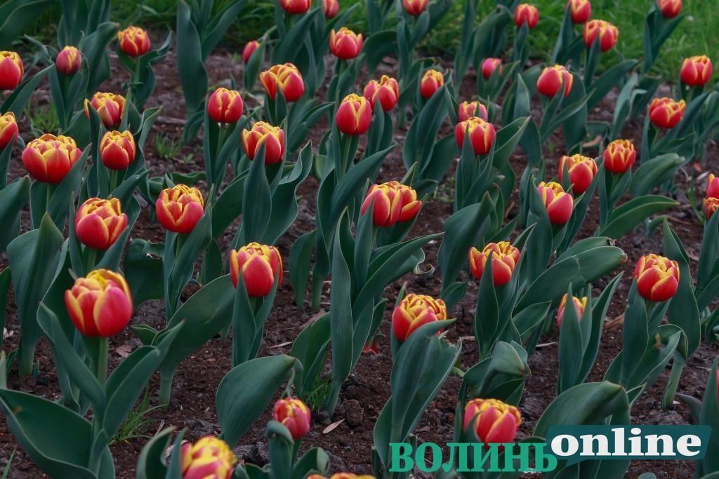Весна у Центральному парку Луцька. ФОТО