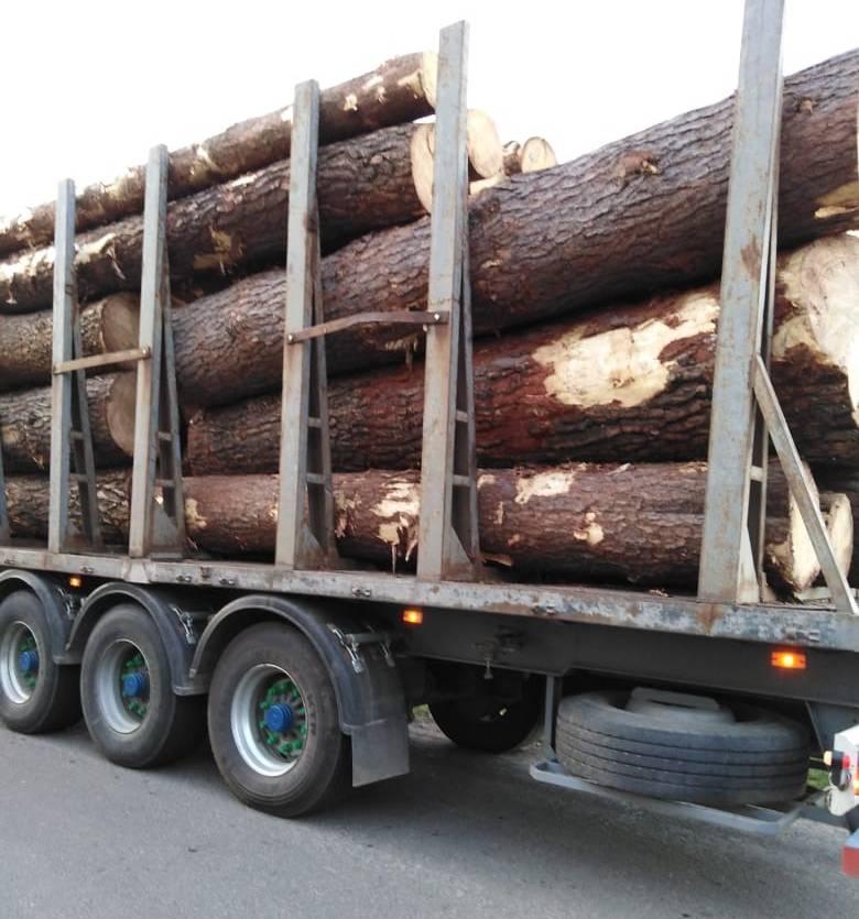 На Волині у заказнику незаконно зрубали дерева
