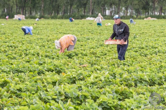 До Фінляндії прибув перший чартер із сезонними працівниками з України