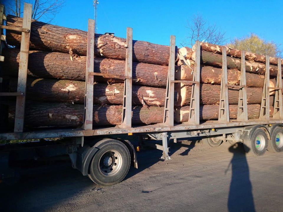 На Волині затримали вантажівку з незаконно зрубаними лісоматеріалами