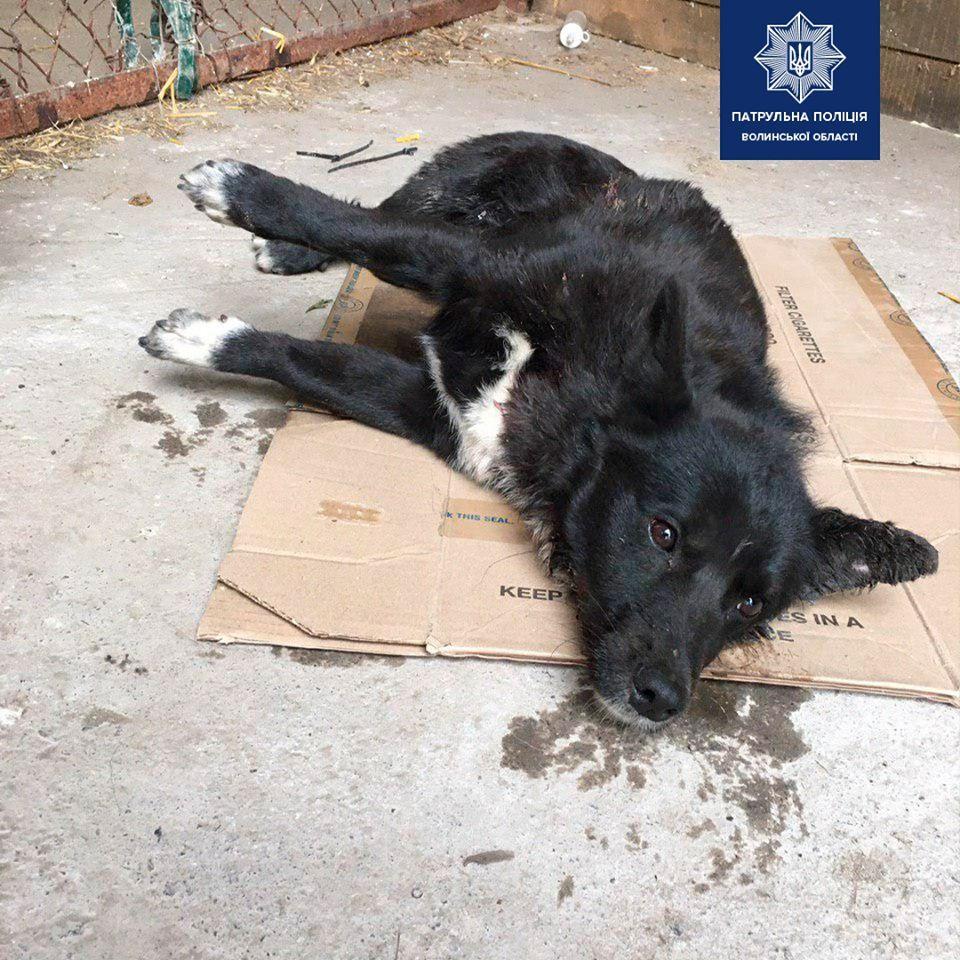 У Луцьку патрульні врятували собаку