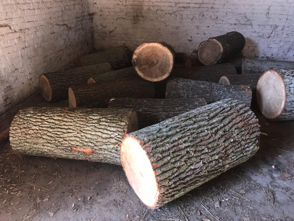На Волині лісова охорона виявила незаконно зрізану деревину дуба та сосни