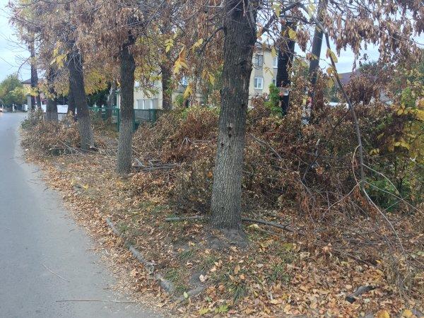 «Волиньобленерго» витратить понад 8 мільйонів на підрізання дерев