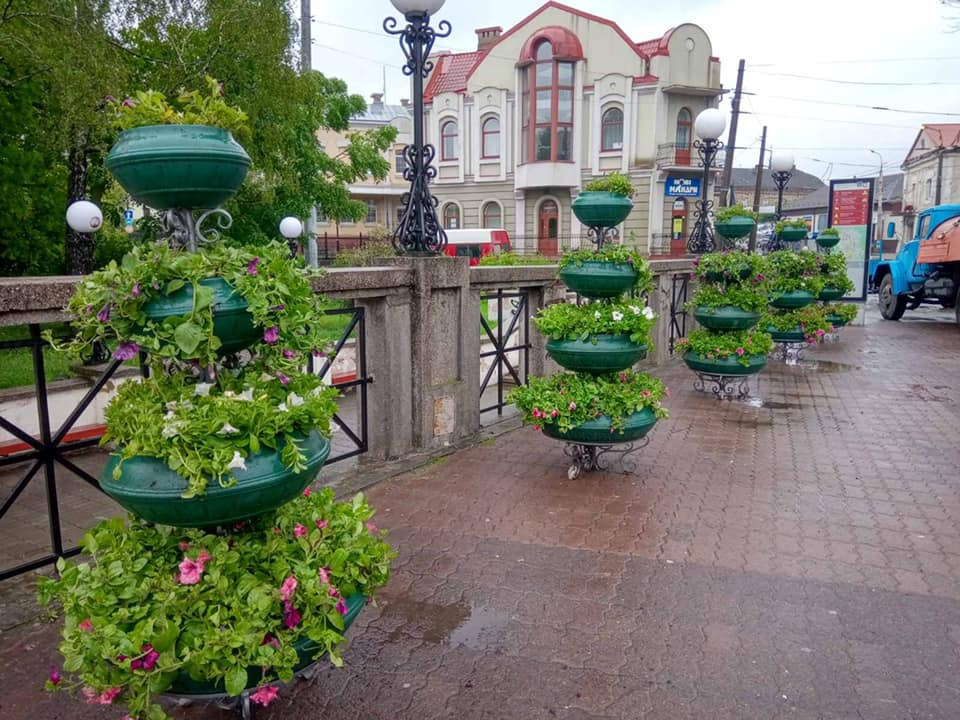 На вулицях Луцька висадили квіти