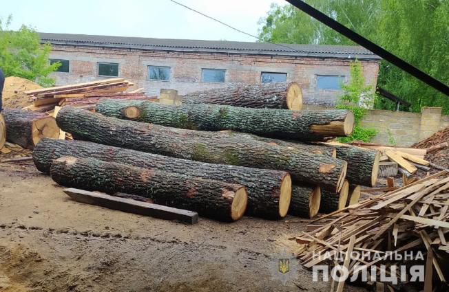 У справах про самовільні порубки деревини на Волині – масштабні обшуки та затримання
