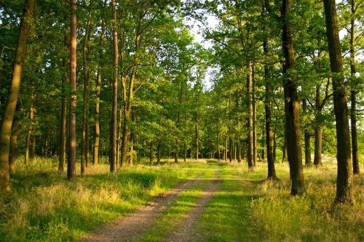 Міськрада на Волині повернула в державну власність ділянку лісового фонду вартістю 30 мільйонів гривень