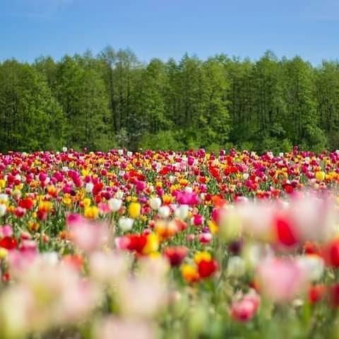 «Волинська Голландія» працюватиме до 13 травня