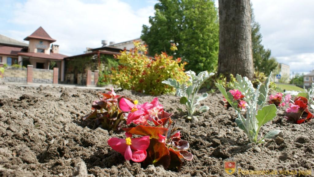 На вулицях райцентру на Волині побільшає квітів