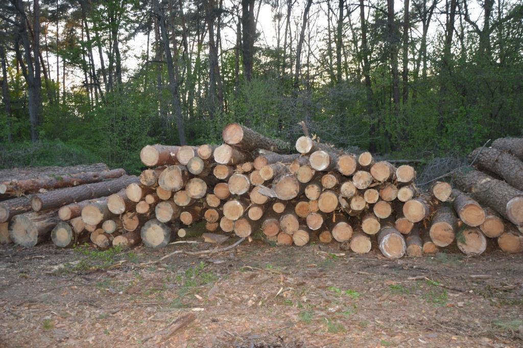 На Горохівщині розслідують факт незаконної порубки лісу. ФОТО